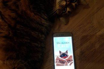 Dalai Lamos katė